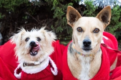 Teija and Ronnie in their Christmas jumpers - sponsor dogs at SOS Animals Spain