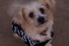 Princess Teija - sponsor dogs at SOS Animals Spain