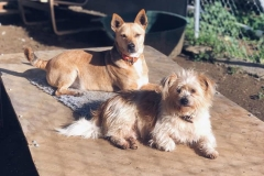 Teija and Ronnie enjoying the sunshine - sponsor dogs at SOS Animals Spain