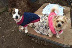 Sponsor dogs Tilda and Teija - sponsor dogs at SOS Animals Spain