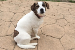 Tilda is a very special dog - sponsor dogs at SOS Animals Spain