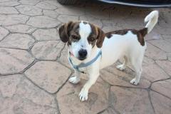 Tilda in the garden - sponsor dogs at SOS Animals Spain