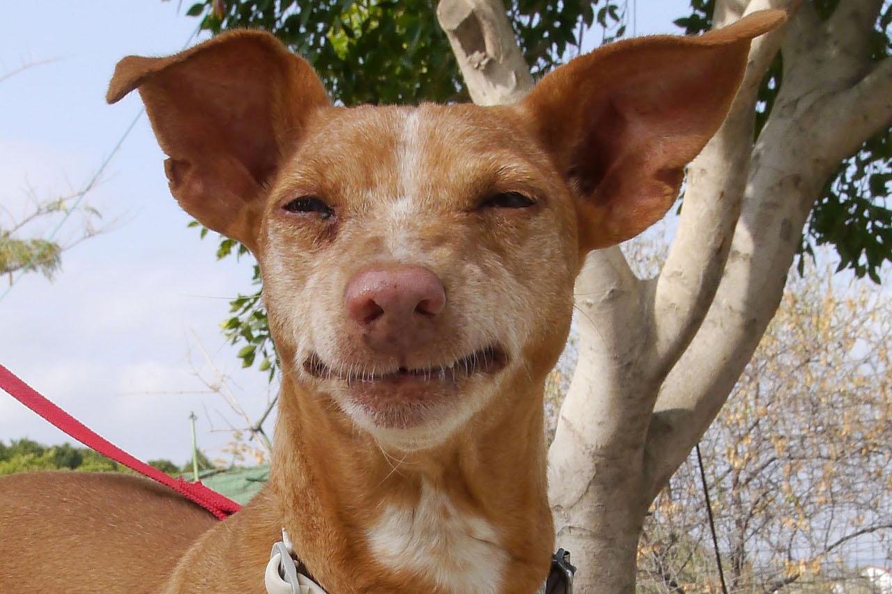 Sweet Molly - sponsor dog at SOS Animals Spain